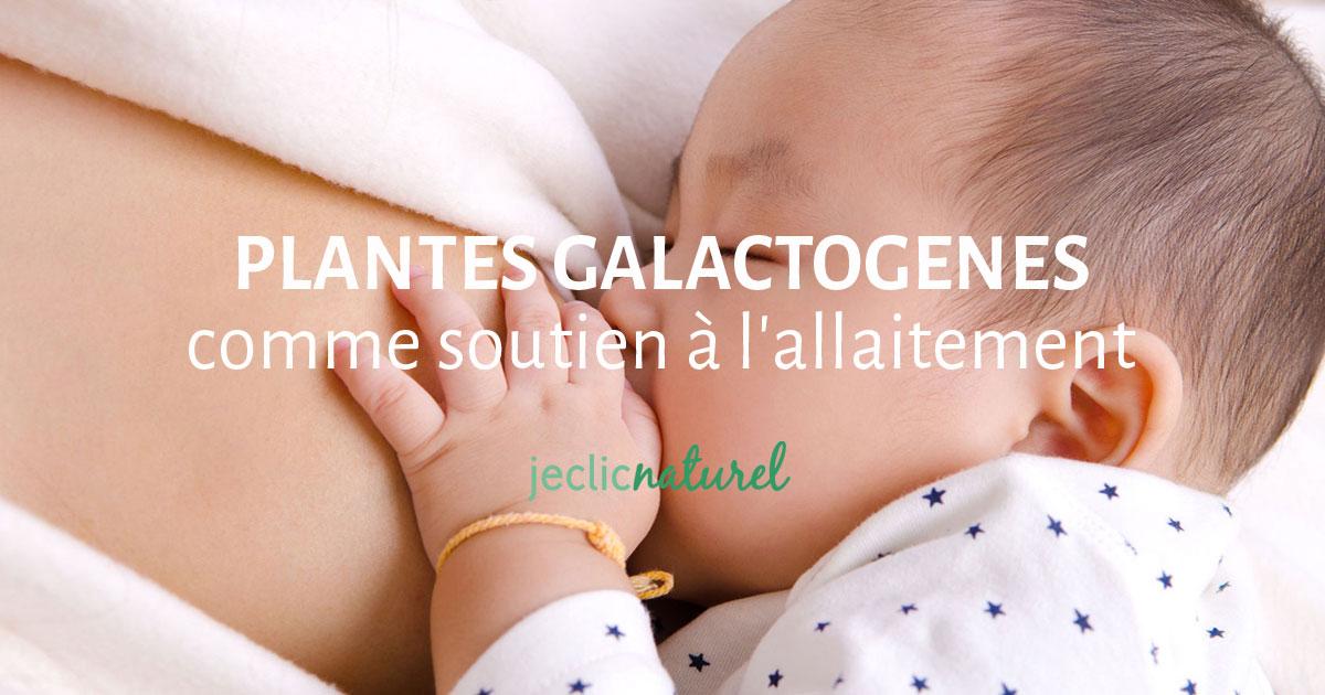 Les plantes galactogènes comme soutien à l'allaitement