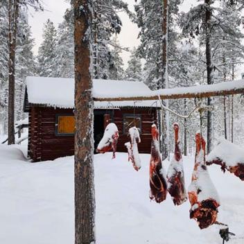 Lynx Vilden stage vie sauvage Jokkmokk 2020